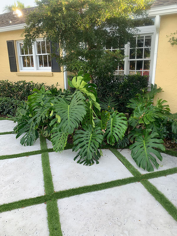 landscaping, turf and a patio